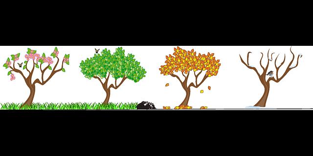 strom, čtyři roční období